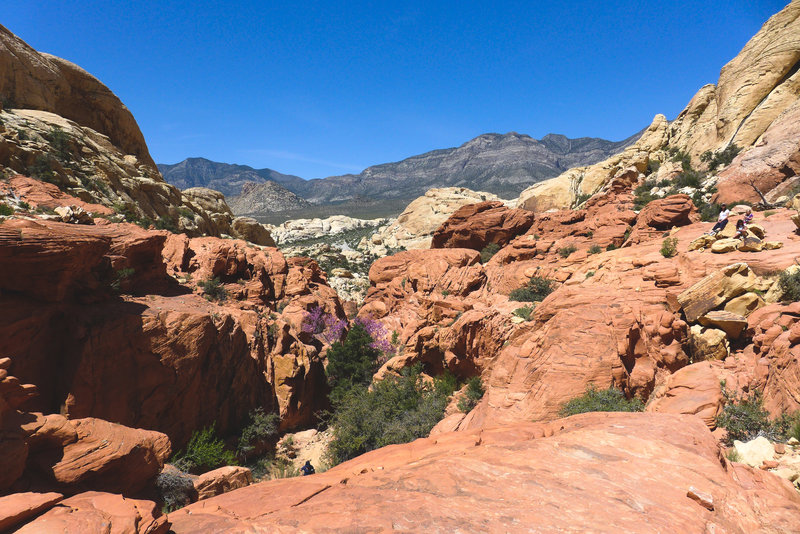 Spring colors in the desert canyons.