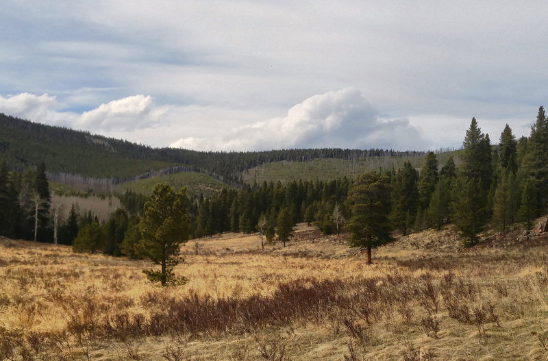 Along the Cub Creek Trail to Staunton Park connection. Looking NW towards the 2000 Black Mountain Wildfire burn site across meadow.