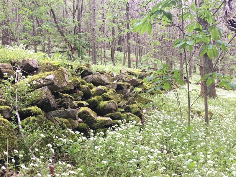 An old wall and wildflowers along the Overmountain Victory Trail.