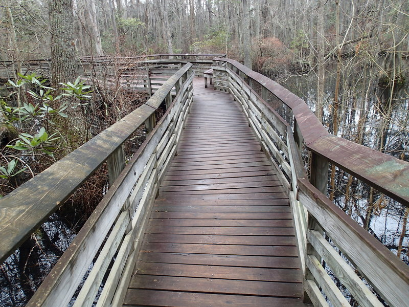 The viewing platform and trail through swamp area.