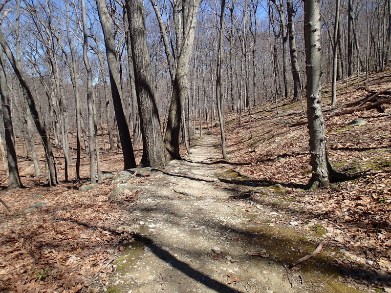 A view of Undercliff Trail.