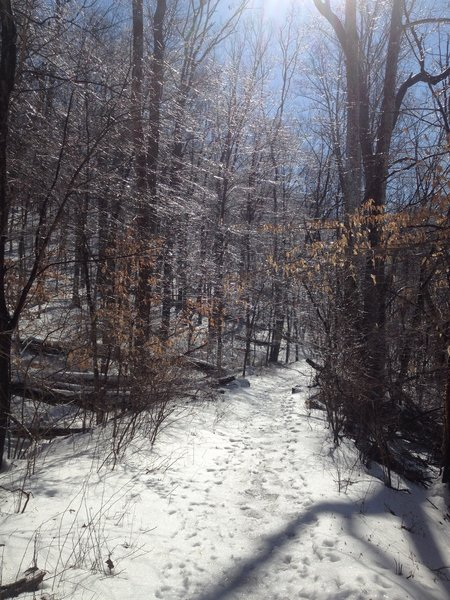 Winter on the Charles Bailey Trail.