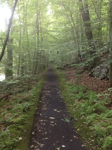 The old railroad bed on the Charles Bailey Trail.