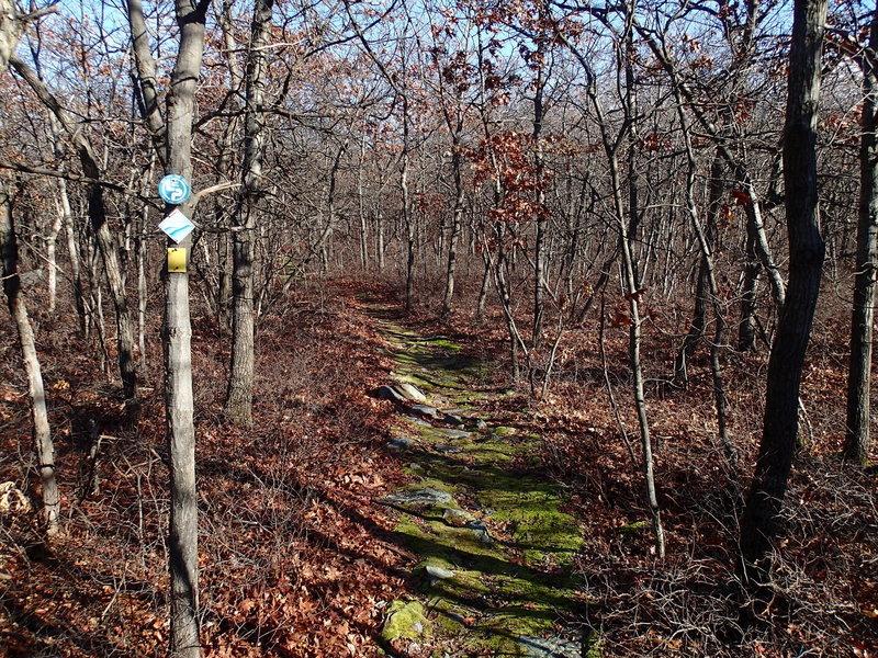 Jessup/Long Path/Highlands Trail traverses dense hardwood forests.