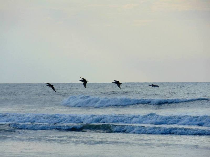 You just might see pelicans over the ocean in Surf City.