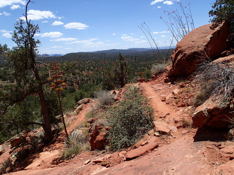 Mescal Mountain offers phenomenal views of the expansive forests around Sedona.