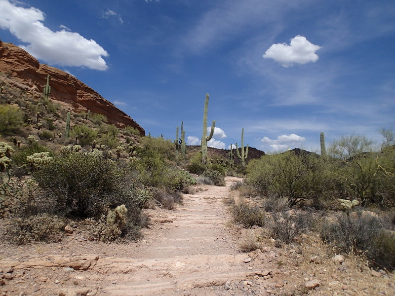 The Second Water Trail offers plenty of cacti, gorgeous views, and complete solitude along its mixed tread.