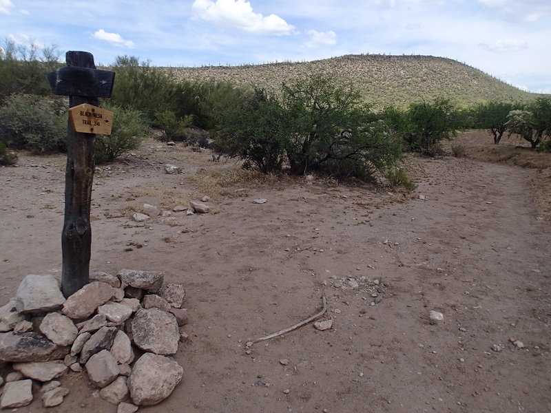 The Second Water Trail - Black Mesa Trail junction is well marked by signage.