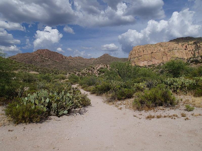 Enjoy expansive views from the Black Mesa Trail - Dutchman Trail junction