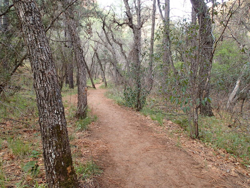 The Boynton Canyon Trail traverses pine forests on a smooth tread.