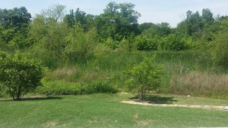 Lush vegetation surrounds Watters Creek.
