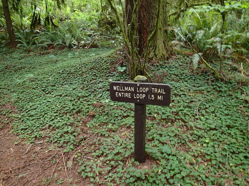 The start of the trail is marked by this sign.