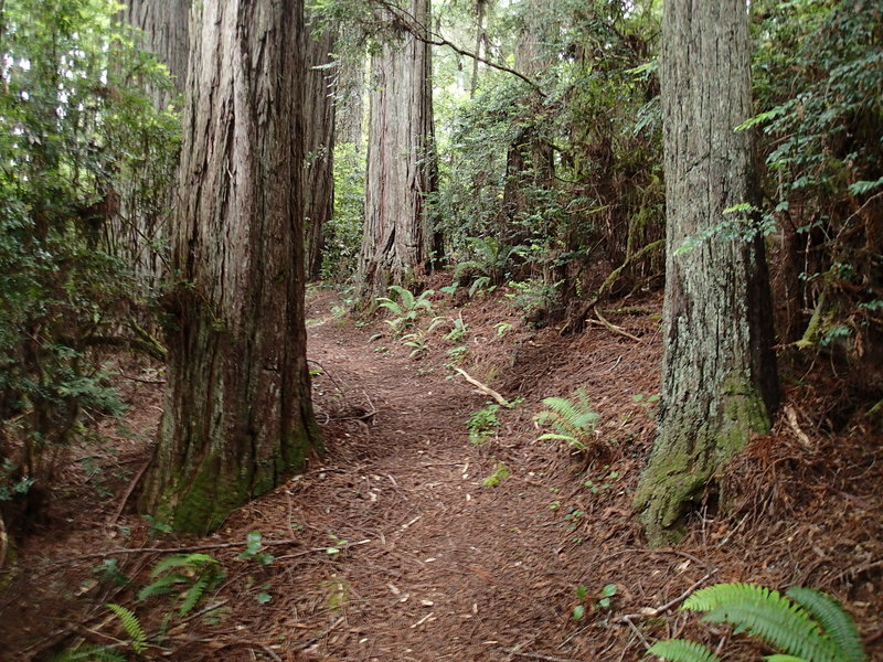 The Wellman Loop Trail has a soft tread throughout its length.