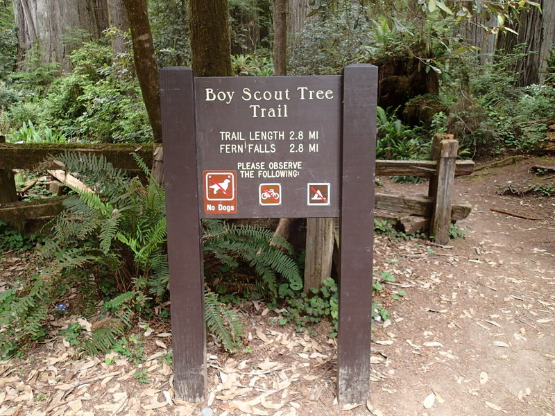 The Boy Scout Tree Trailhead is marked by this sign.