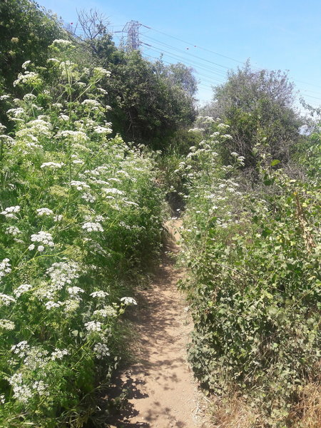 Wildflowers hug the Coyote Trail in the spring.