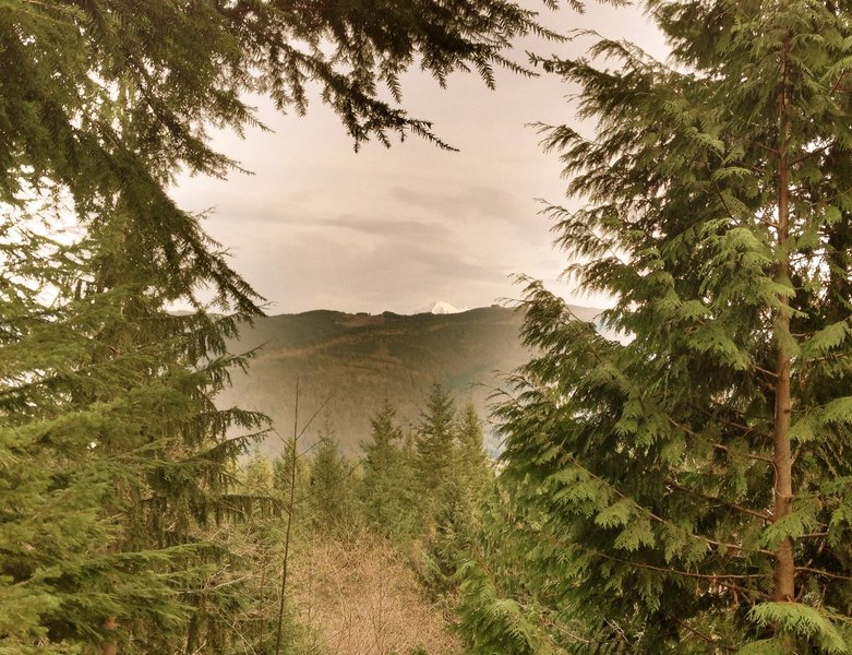 The tip of Mt. Baker peeks through the trees above Stewart Mountain & Lake Whatcom.