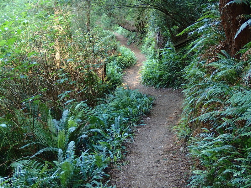 Trillium Falls Trail meanders through age-old forests to a beautiful waterfall.