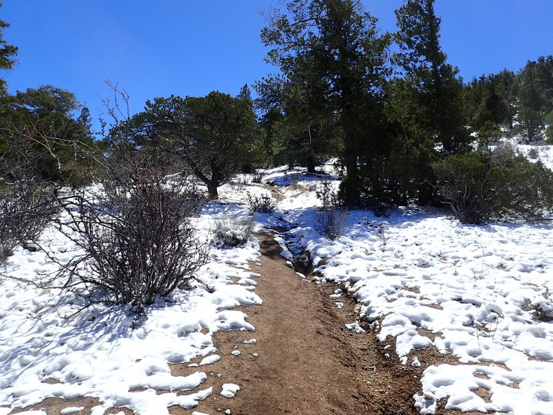 Finally the incline relents when you hit the ridge! You're almost there!
