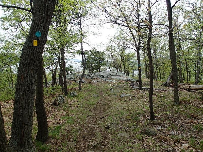 View on the lower Stillman Trail.