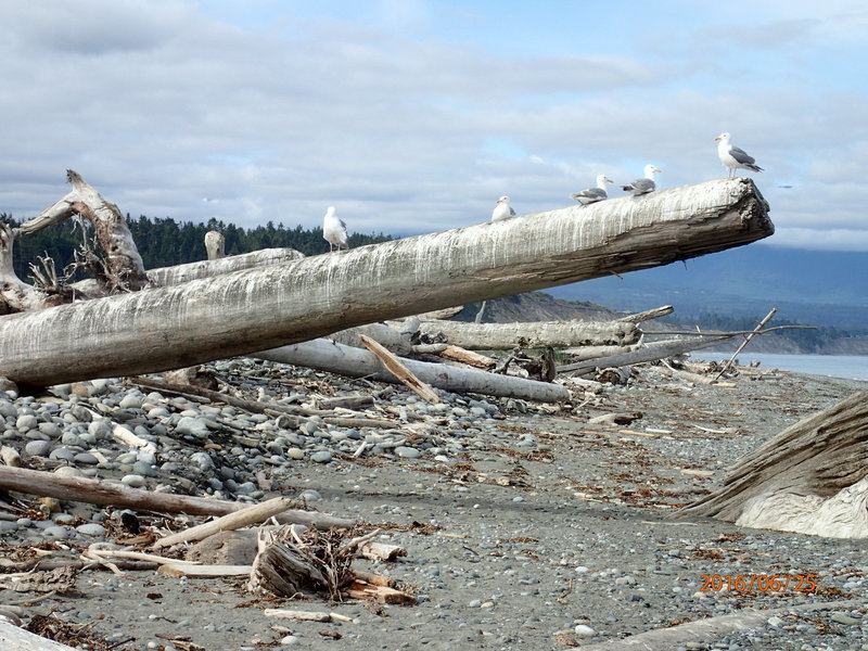 Just some of the birdlife and driftwood along the spit.