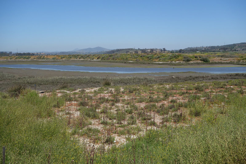 San Dieguito River flowing through the San Dieguito Lagoon.