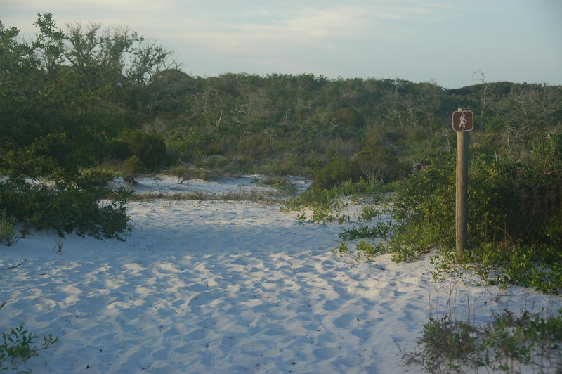 Pine Beach Trail where it leaves the road and heads through the dunes.