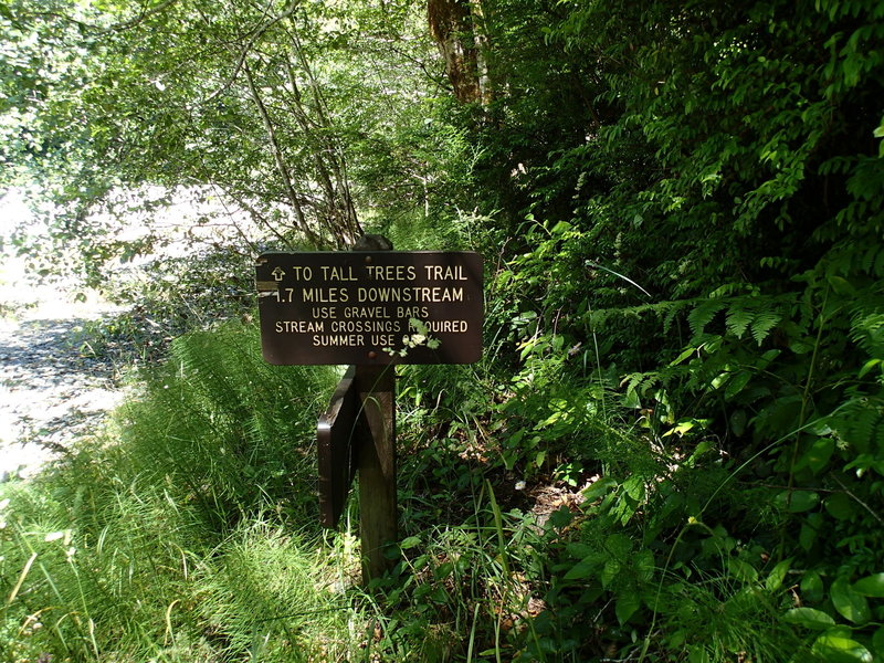 Emerald Ridge Trail ends here at the bank of Redwood Creek.