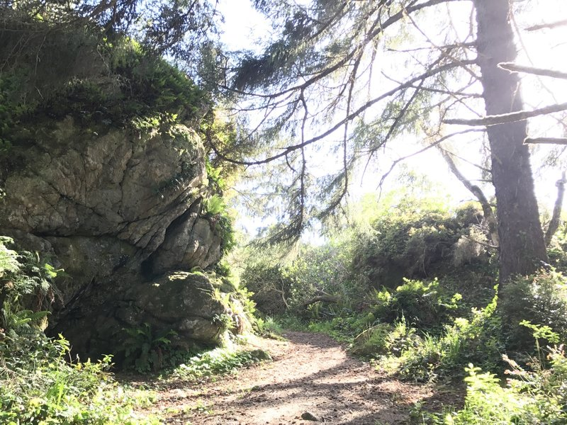 A big rock on Patrick's Point Rim Trail.