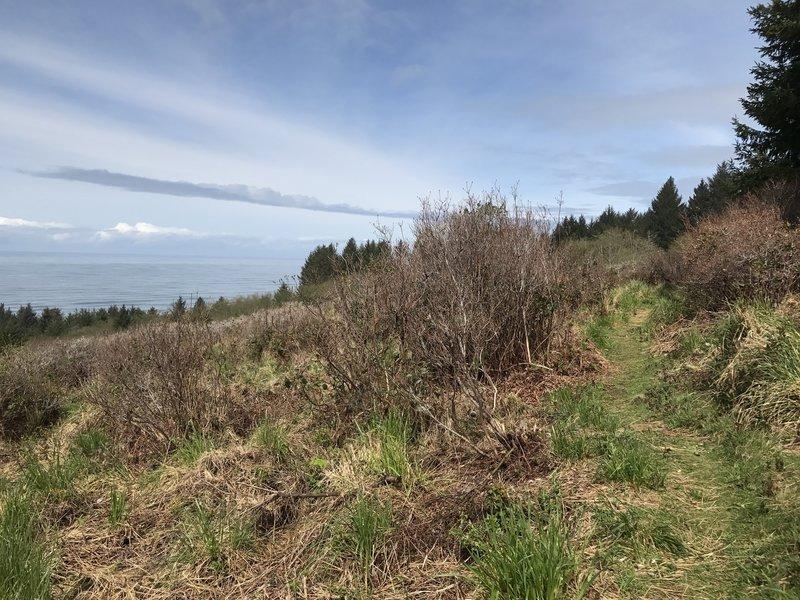 Azalea Trail.