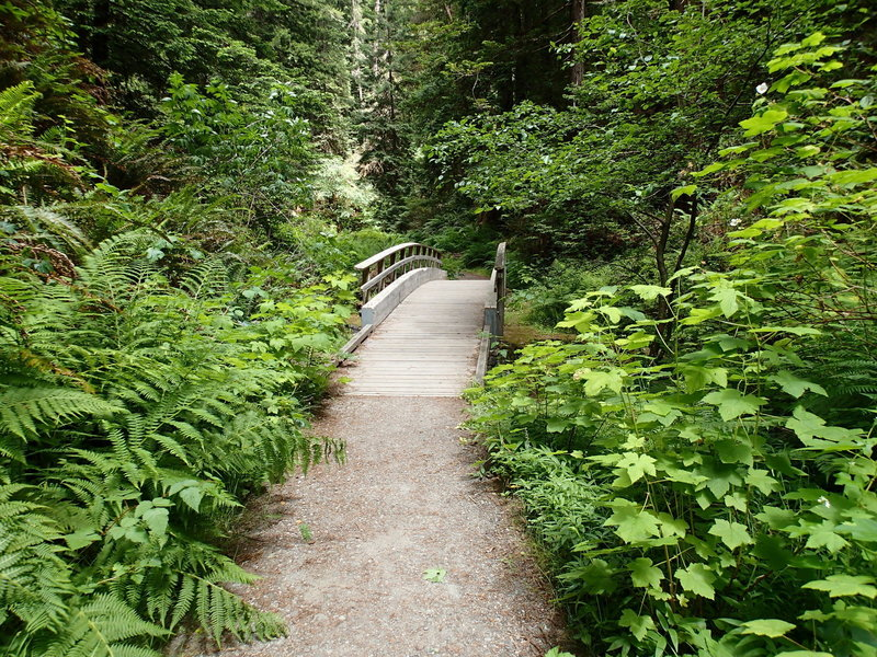 Park Road/Fern Canyon Trail.