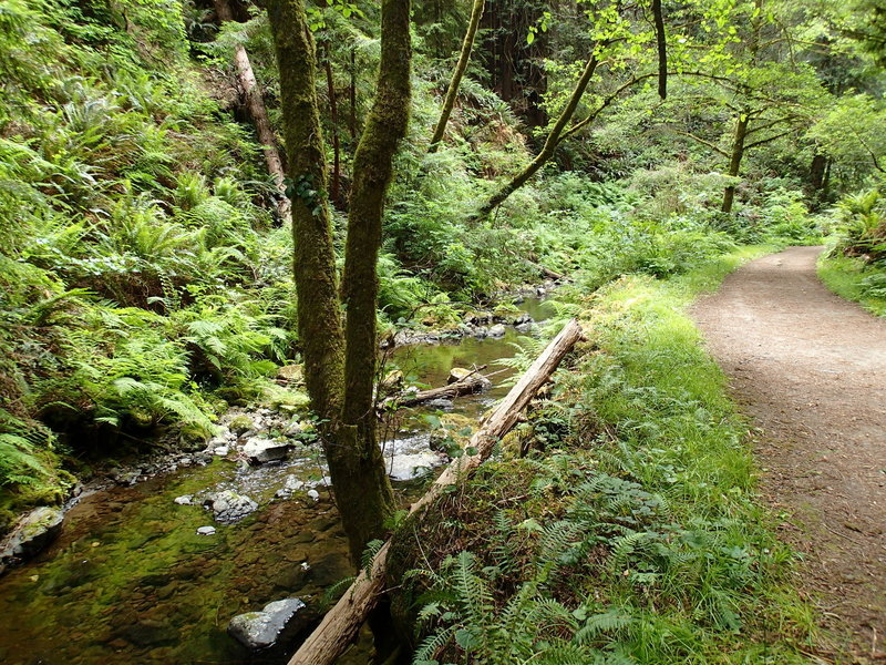 The stream alongside Park Road/Fern Canyon Trail.