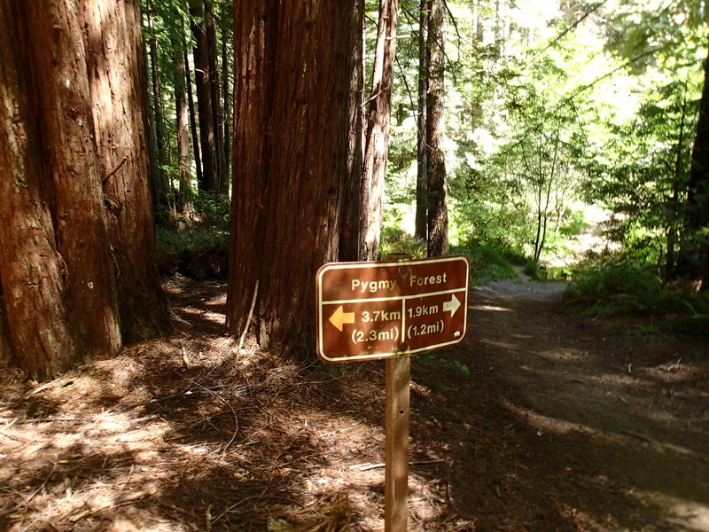 The trailhead sign at the start of the loop portion.