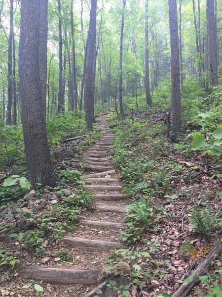 The steep climb up to Buck Ridge starts here.