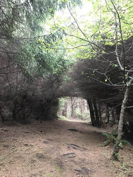 Stone Lagoon Trail.
