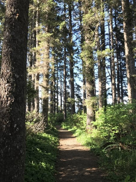 Patrick's Point Rim Trail.
