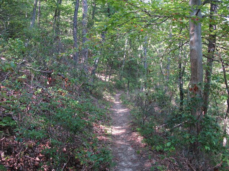 Dense vegetation shrouds the Stony Run Trail.