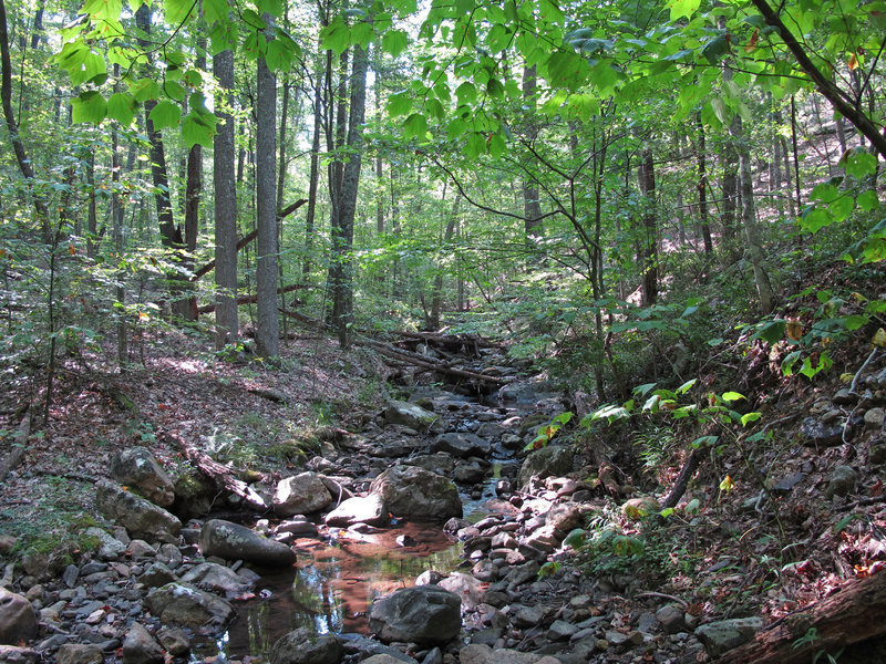 Enjoy lots of cricks on the Stony Run Trail.