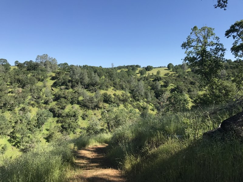The hills are green in Mokelumne (in April, at least).