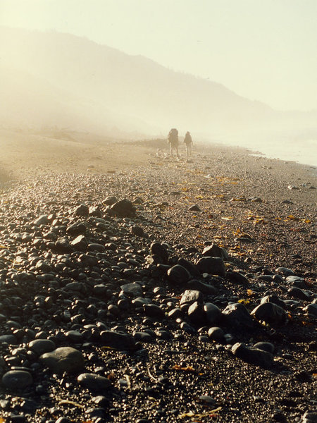 A misty morning makes for a beautiful hike along the Lost Coast Trail.
