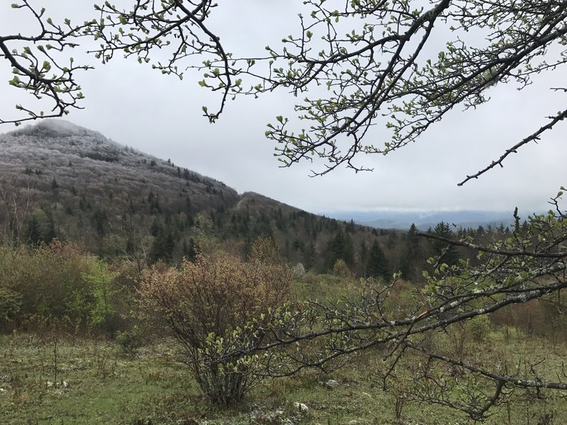 Ice-capped trees survive the elements at the higher elevations. This photo was taken in May!