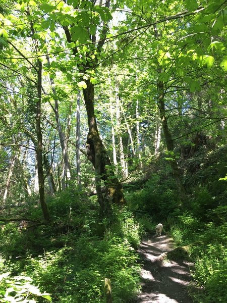The trails in Seahurst Park are lush and fun for the whole family.