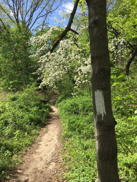 White blazes mark the trail the whole way.