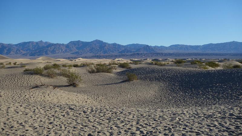 The edge of the Mesquite Sand Dunes shine in the morning light.