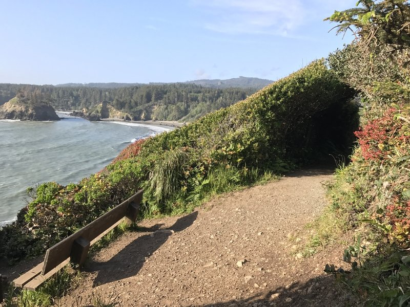 The west side of the Trinidad Head Trail looks toward Trinidad State Beach and College Cove.