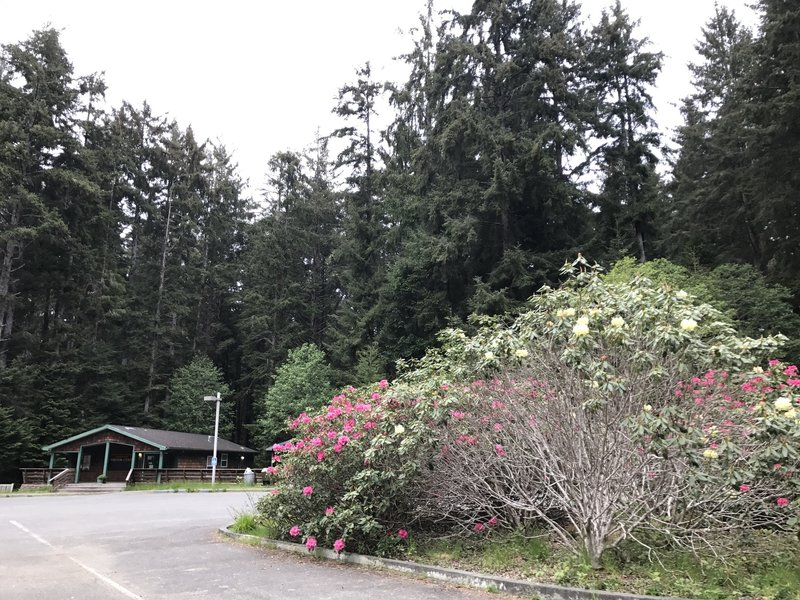 Patrick's Point Visitor Center is beautified by blooming rhododendrons.