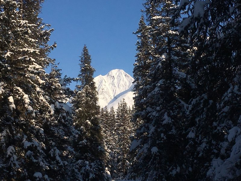 This is just one of several views of the mountains below the timberline.