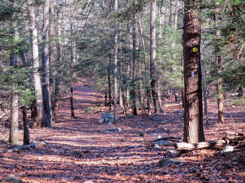 In autumn, the trail remains full of green.