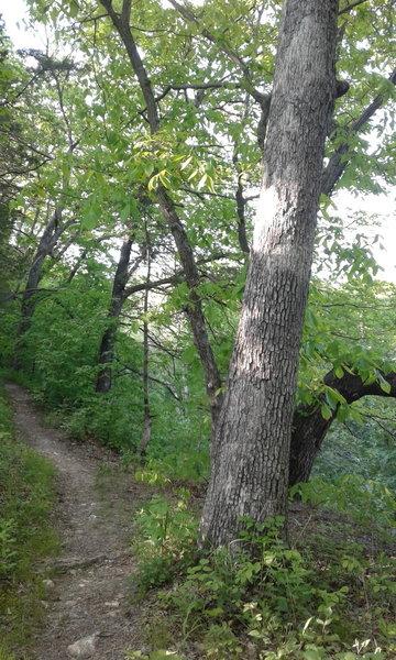 The trail periodically treads alongside Gans Creek.