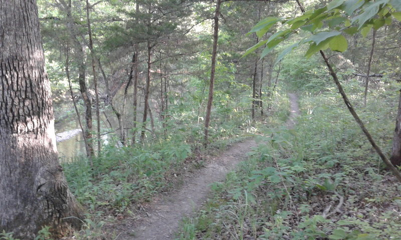 The trail follows the contours of Gans Creek through the forest in multiple places.