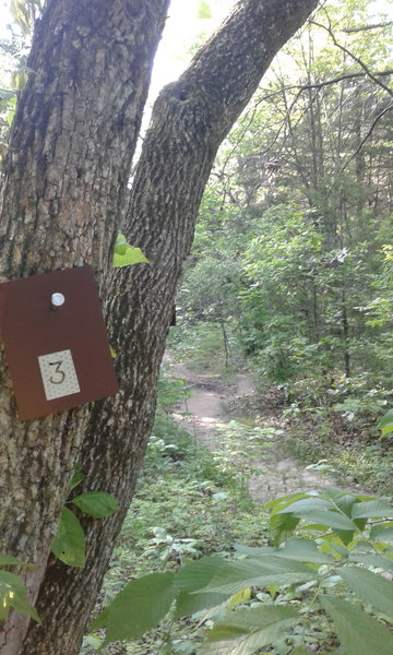 This is the trail with the number three blaze. Follow these blazes to the most spectacular overlooks in the park!